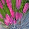 2011-2 Blumen